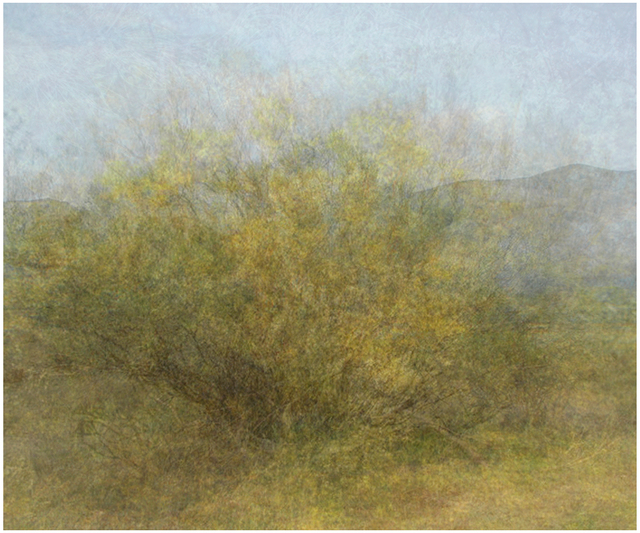 , 'Twelve Years out of a Death Row Sentence (Dying Wish- Ratama Tree),' 2009-2016, Mark Moore Fine Art