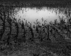 , 'Hailed Out Corn Field, July 2016,' 2016-printed 2018, Scott Nichols Gallery