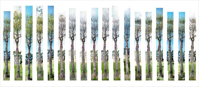 , 'The Yoga Tree,' 1994-1996, TKG+
