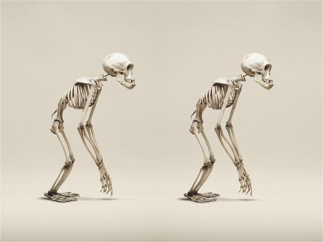 , 'Juvenile Chimpanzee,' 2014, KLOMPCHING GALLERY