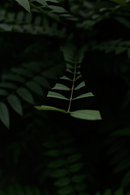 , ' Insomnia (Verde St, 0082),' 2019, Haw Contemporary