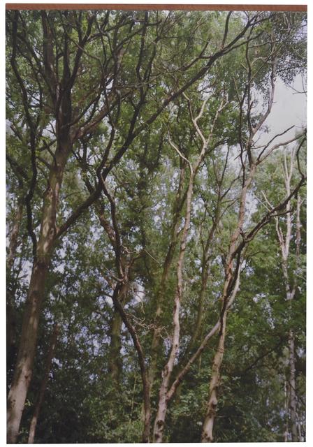 , 'Trees # 2,' 2014, Tatjana Pieters