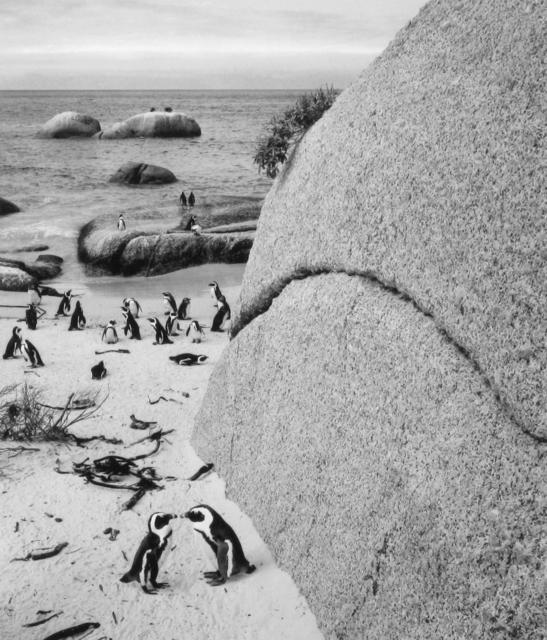 , 'Boulders Beach, South Africa,' 2002, photo-eye Gallery