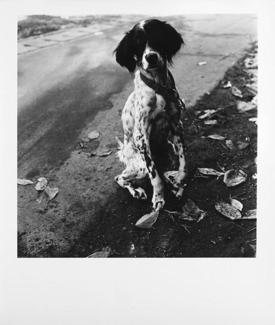 Issei Suda, 'Dog', 1970 ca., Il Ponte