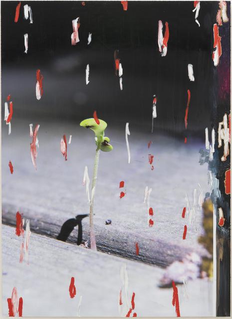 , 'Growth 1,' 2018, Josh Lilley