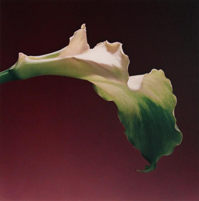 , 'Calla Lily,' 1988, Robert Miller Gallery