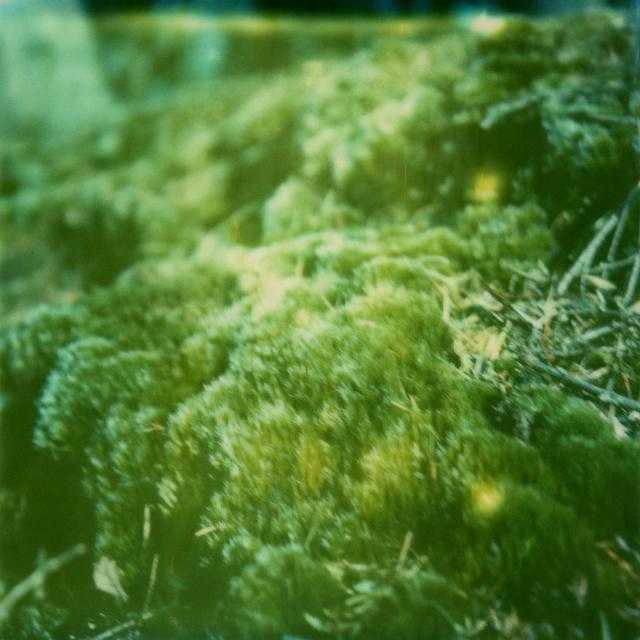 Julia Beyer, 'More Moss', 2016, Instantdreams