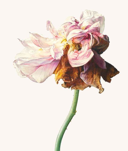 , 'La Vie en rose,' , Jonathan Cooper