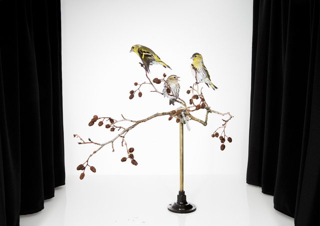 , 'Carduelis spinus,' 2015, Helsinki Contemporary