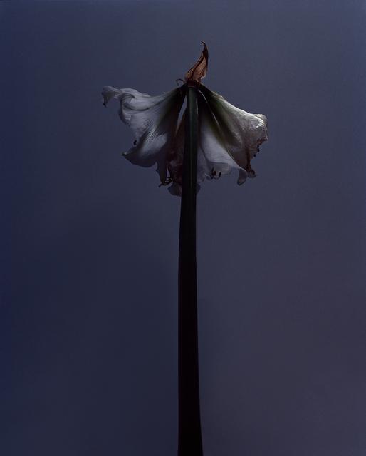 , 'fig. XI,' 2017, Galerie SOON
