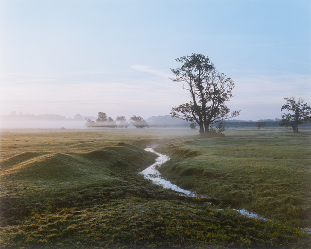 Harry Cory Wright, 'New Forest ', 2018, Atlas Gallery