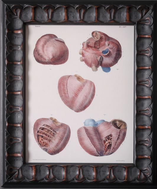 Unknown Artist, 'Anatomical Heart 2', Hieronymus