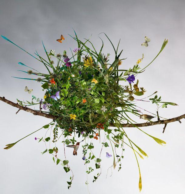Ysabel Lemay, 'The Summer Nest ', 2010 , The Directed Art Modern