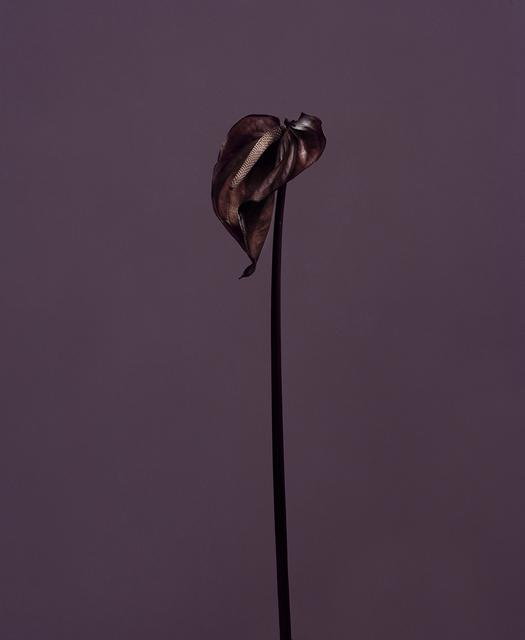 , 'fig. XVII,' 2017, Galerie SOON