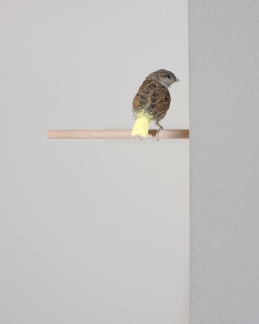 , ' Untitled [Gelbe Farbe macht aus Spatzen Kanarienvögel],' 2012, ASPN