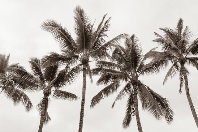 Jessica Nugent, 'Tropical Breeze No2', 2020, ArtStar