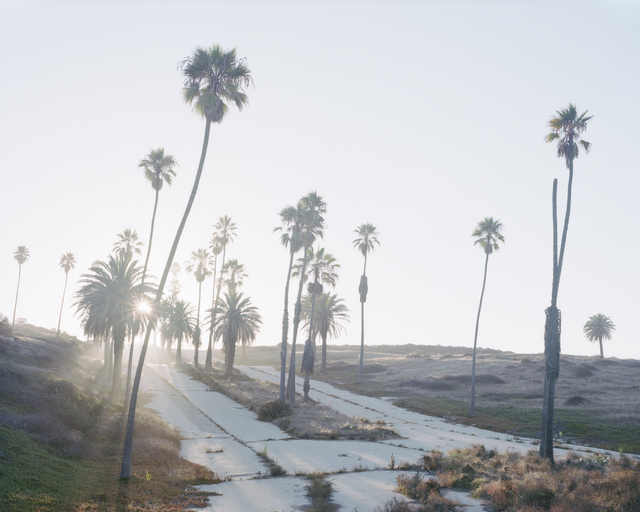 , 'Los Angeles Palms #09,' 2017, Samuel Maenhoudt Gallery