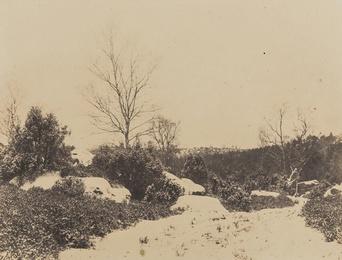 Forêt de Fontainebleau, Sous-Bois sous la Neige