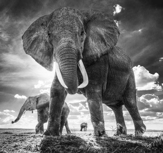 David Yarrow, 'The Untouchables (Artist Proof)', 2017, Maddox Gallery Gallery Auction