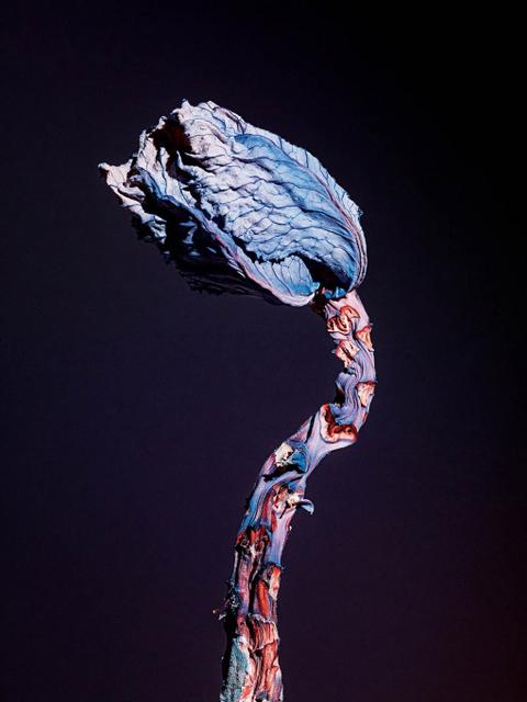 , 'Maldoror,' 2014, Foam Fotografiemuseum Amsterdam