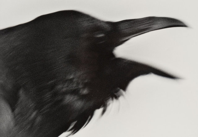 Unknown Artist, 'Untitled (Crows) (2 works)', Heritage Auctions