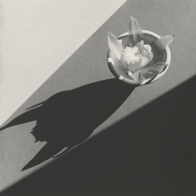 , 'Orchid,' 1987, J. Paul Getty Museum