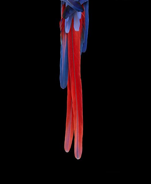, 'Scarlet Macaw #3, Albuquerque, NM, 2016,' 2016, Artistics