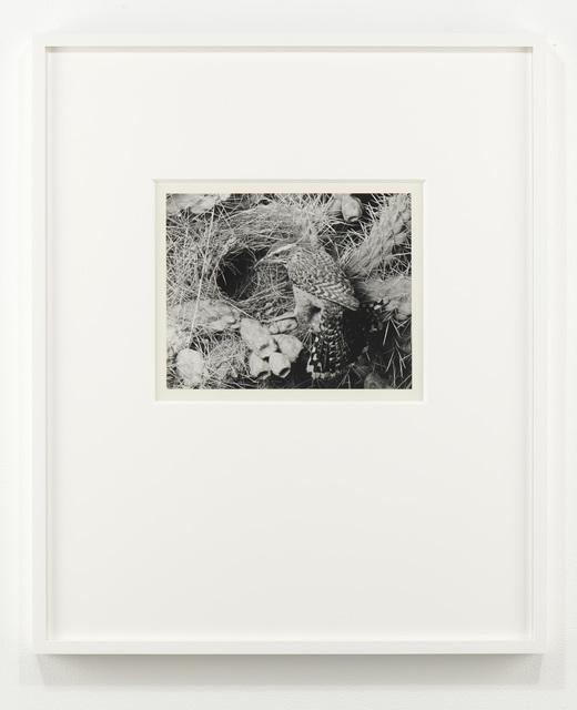 Eliot Porter, 'Cactus Wren, Arizona', 1941, Jessica Silverman Gallery
