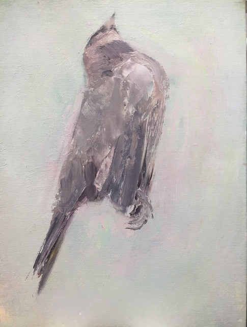 , 'grey bird study ,' 2017, LAUNCH LA