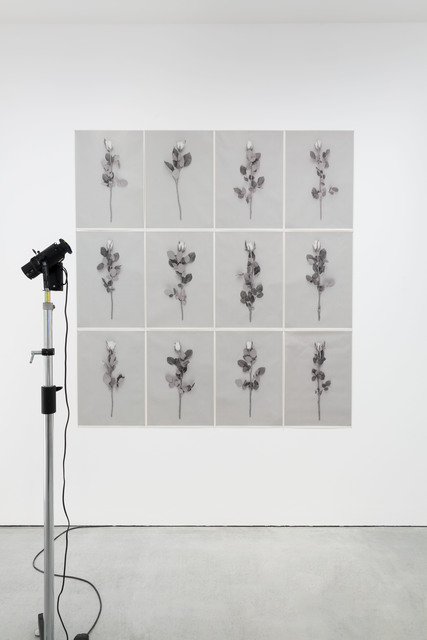, 'Flowers,' 2015, Carroll / Fletcher