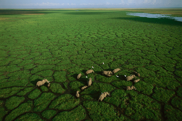 , 'Elephants grazing in Lake Amboseli National Park, Kenya,' 2005, Anastasia Photo