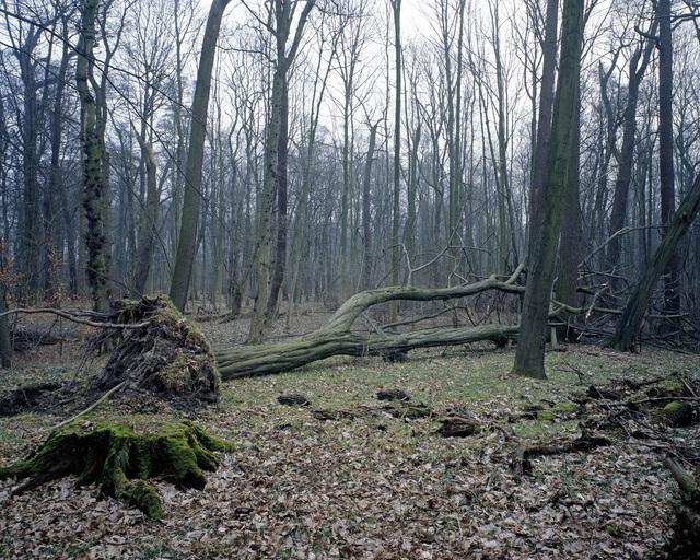 Nicolas Grospierre, 'Arboretum #1', 2009, Alarcón Criado