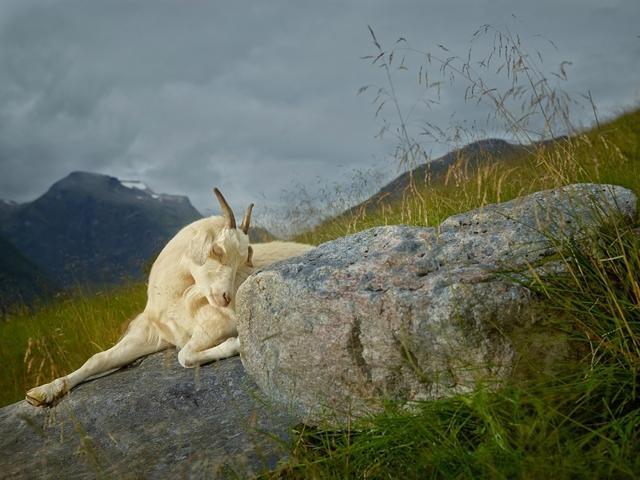 , 'Hazel, Geiranger Fjord, Norway,' 2013, Burnet Fine Art & Advisory