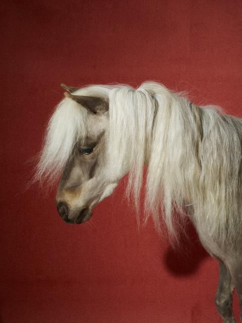 , 'Celine Horse,' 2016, Andrew Kreps
