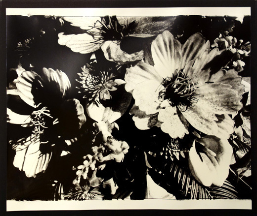 Daido Moriyama, 'untitled', unknown, Gallery TAGBOAT