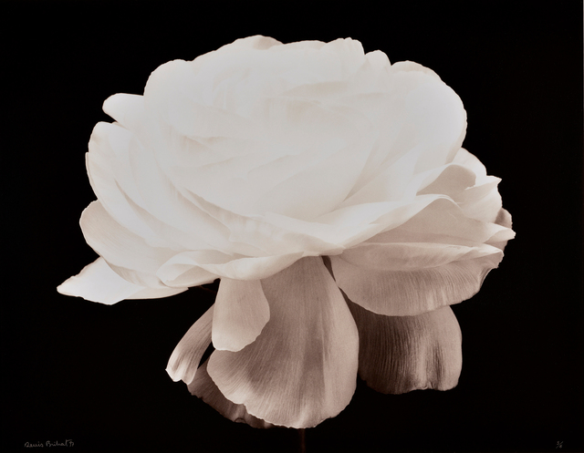 , 'Gardenia, Fond Noir,' 1994-printed 1997, Nailya Alexander Gallery
