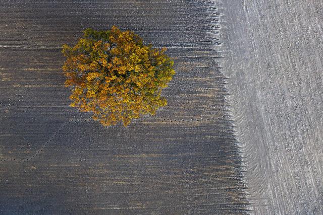 , 'Autumn #11,' , Photo12 Galerie