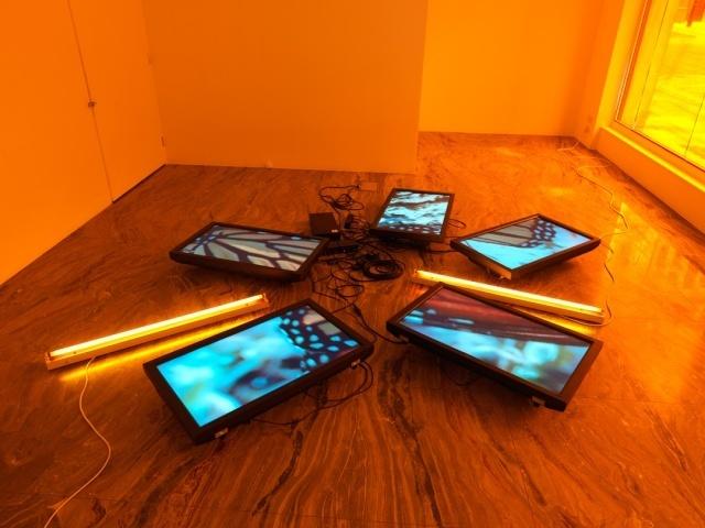 , 'Untitled (Butterfly Videowall #2),' 2008, San Jose Museum of Art