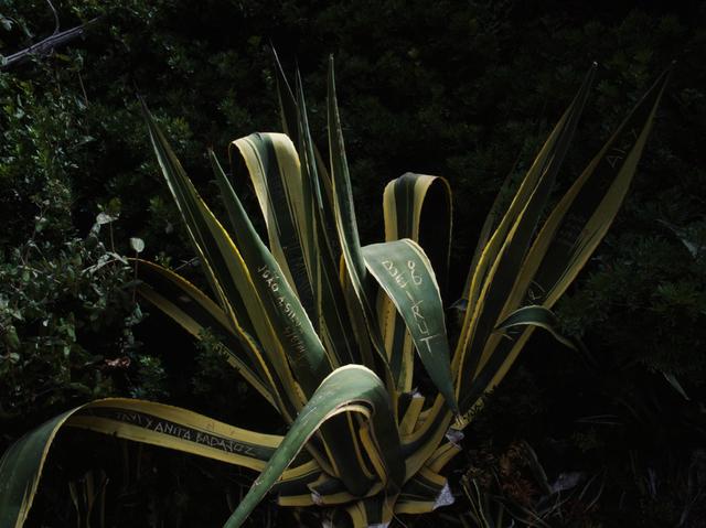 , 'Beirut 06,' 2007, Carlos Carvalho- Arte Contemporanea