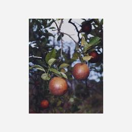 Orange Grove #6