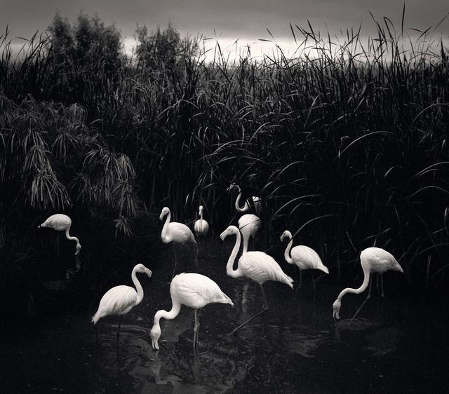 , 'Mt. Etjo, Namibia (Flamingos),' 2005, Nailya Alexander Gallery