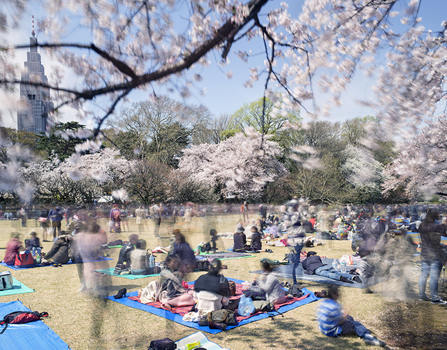, 'Hanami #11, Shinjuku Gyoen, Saturday April 5th (TV14611),' 2014, Benrubi Gallery