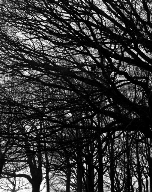 Hélène Binet, 'Winter Hampstead Heath, London', 2012, Photography, Hand printed b/w silver gelatin, ammann//gallery