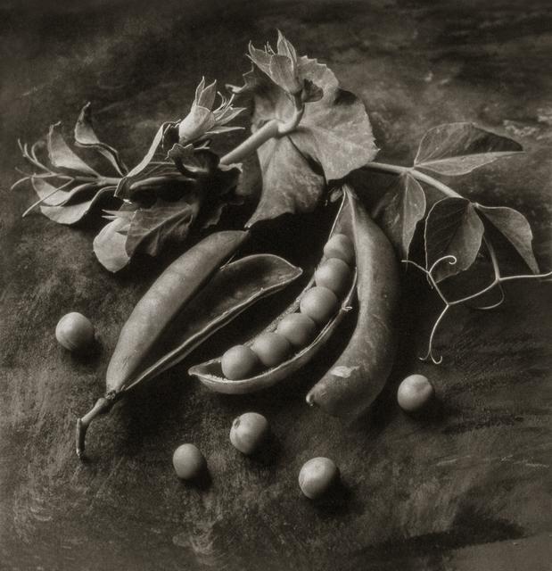 , 'Sweet Peas,' , Gallery 270