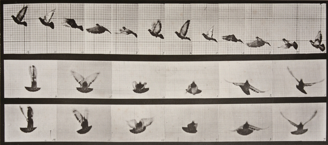 , 'Animal Locomotion: Plate 755 (Pigeon in Flight,' 1887, Huxley-Parlour