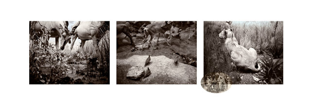 Ian van Coller, 'Lion and Antelope', 2013, jdc Fine Art