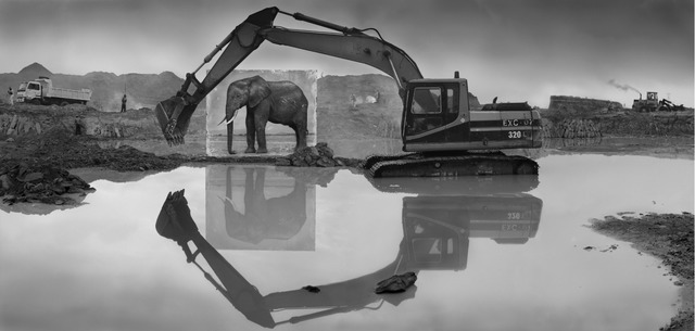Nick Brandt, 'Quarry with Elephant', 2014, Edwynn Houk Gallery
