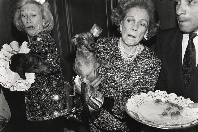 , 'Dachsunds fighting over canapés, New York,' 1990, The Photographers' Gallery   Print Sales