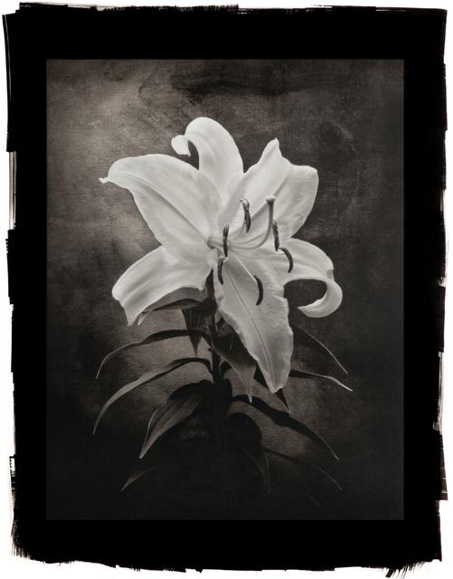 Cy DeCosse, 'Casablanca Lily', Susan Spiritus Gallery