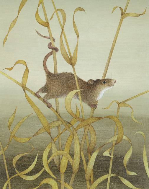 , 'Harvest Mouse,' , Jonathan Cooper